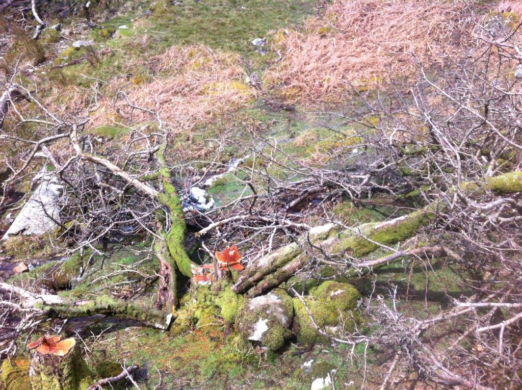 Trees felled without permission in the 'Special Area of Conservation'