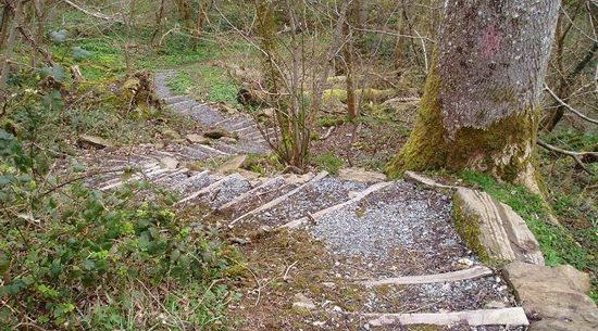 parc mawr woodland